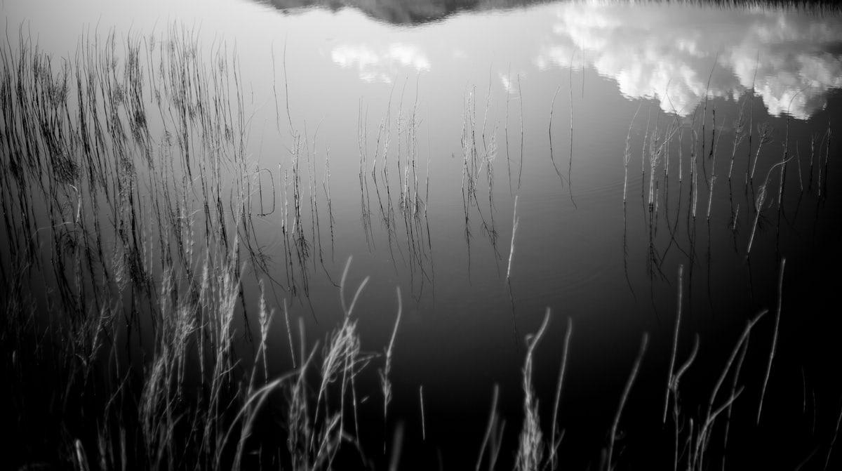 Reflet poétique dans l'eau